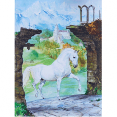 Lipizzaner Greetings Card 01